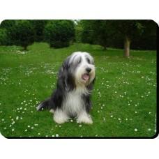 Bichon Frise  Dog Mousemat   31
