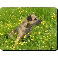 Brussels Griffon (Gold) Dog Mousemat   50